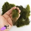 50 natural feathers olive green color