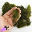50 piume naturali color verde oliva