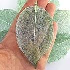 Real leaves